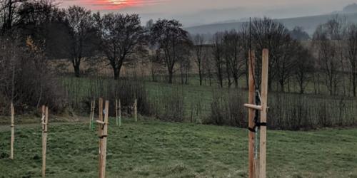 Pohled na západ slunce ze Tří křížů přes třešňovou alej